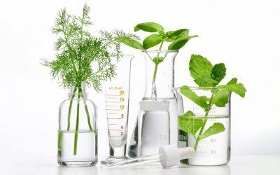 Connaitre les terpènes et leurs propriétés thérapeutiques